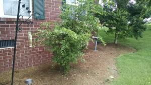 Aubrey Tree